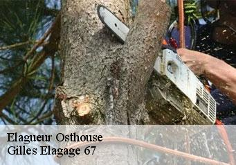 Elagueur  osthouse-67150