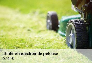 Tonte et refection de pelouse  67450