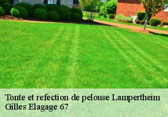 Tonte et refection de pelouse  lampertheim-67450 Artisan Wels