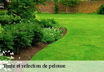 Tonte et refection de pelouse