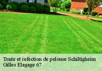 Tonte et refection de pelouse  schiltigheim-67300 Artisan Wels