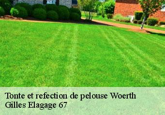 Tonte et refection de pelouse  woerth-67360 Artisan Wels